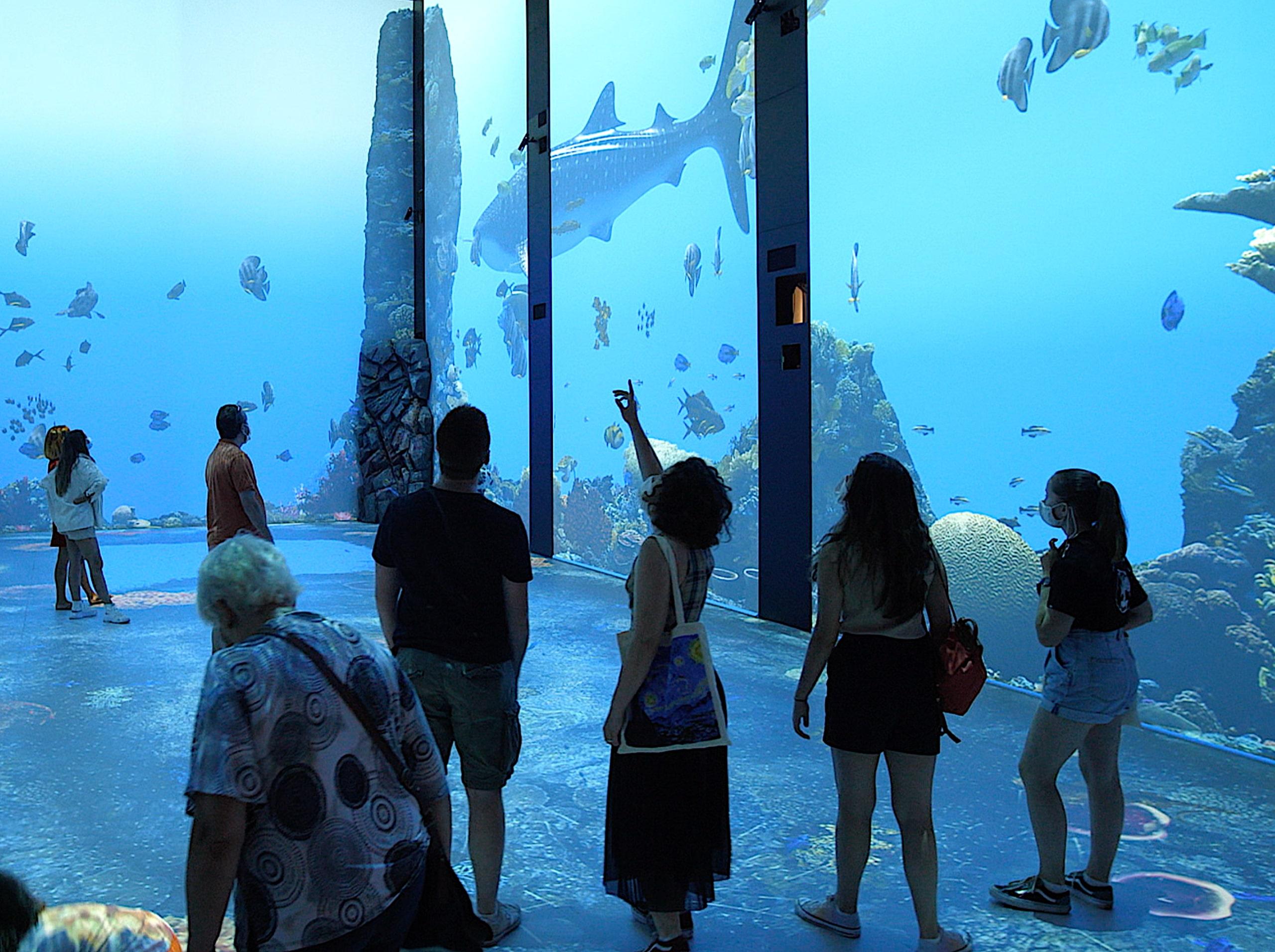 aquarium IMMERSION